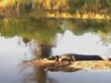 Gator at Camp Mack